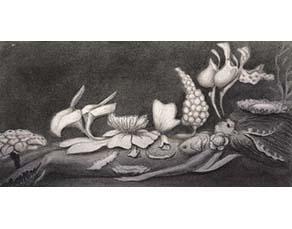 Alfred Kubin, Plantes marécageuses